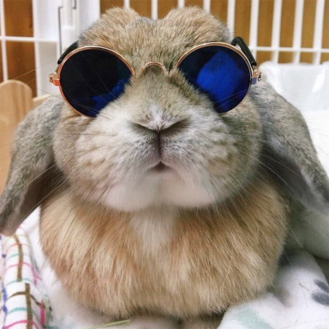 Кролики в смешные картинки, фоны для