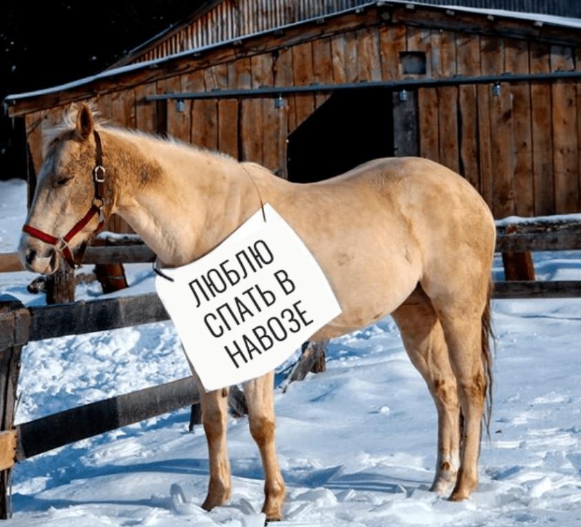 лошадь у забора