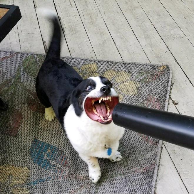 черно-белая собака и ветродуй