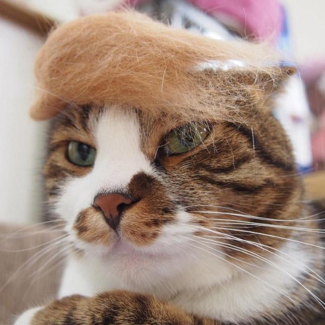 полосатый кот с шерстью на голове