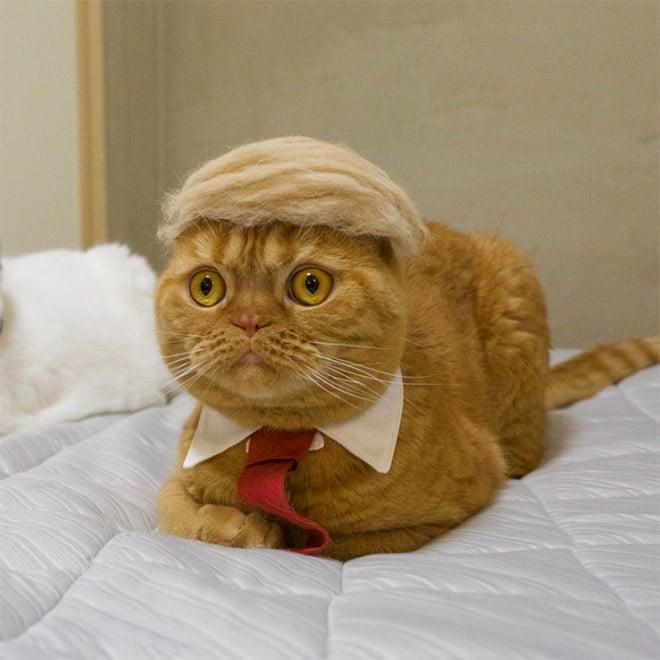 рыжий кот с красным галстуком