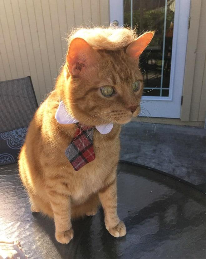 рыжий кот в галстуке