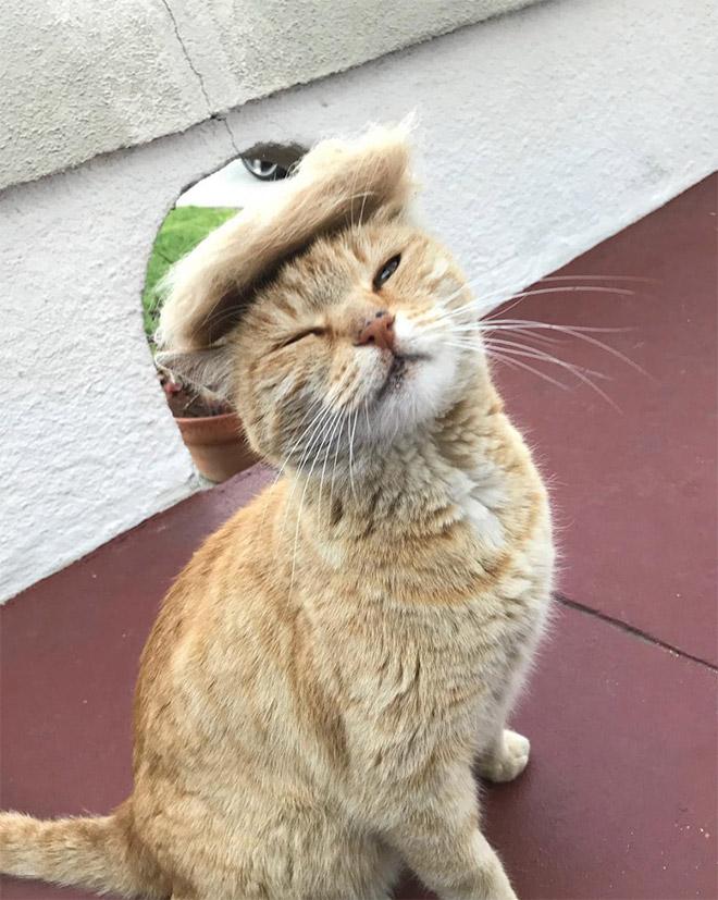 рыжий кот в парике из шерсти