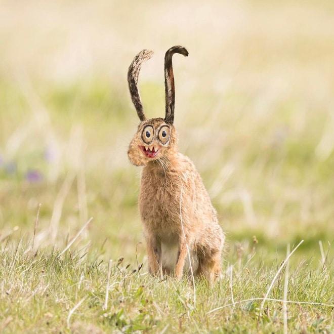 кролик фотошоп