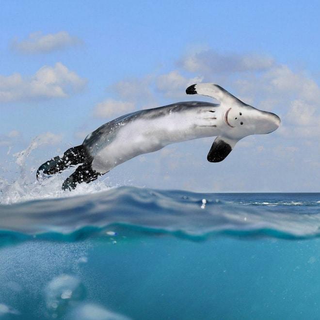 дельфин фотошоп