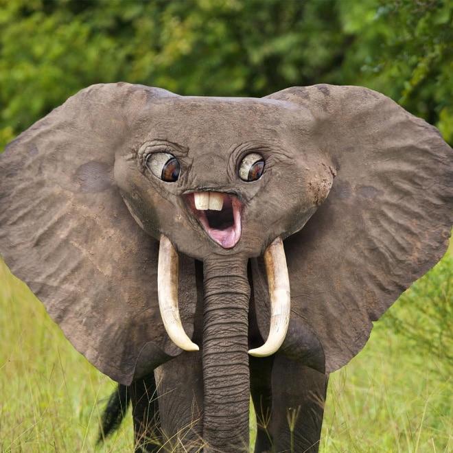 слон фотошоп