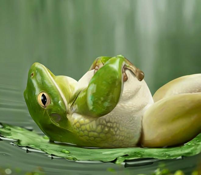 Толстая лягушка лежит на спине