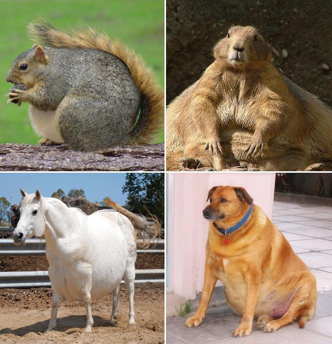 Толстые животные коллаж рис 2