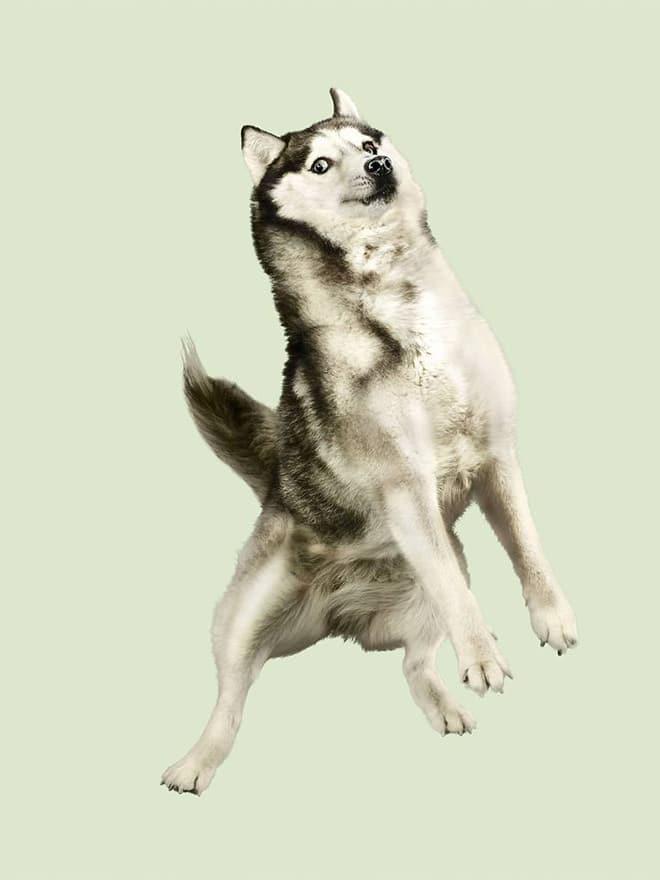 смешной пес в полете