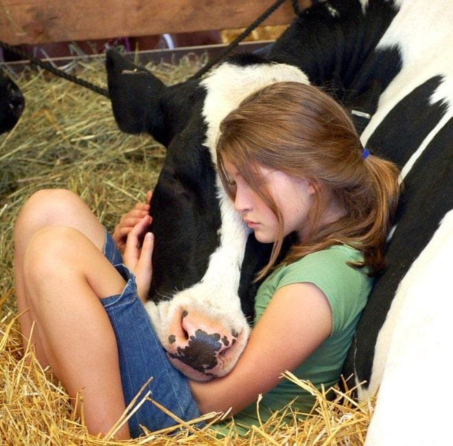 девочка обнимает морду коровы