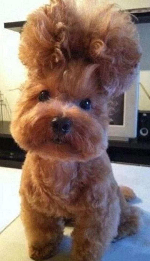 стрижки животных: милый пес