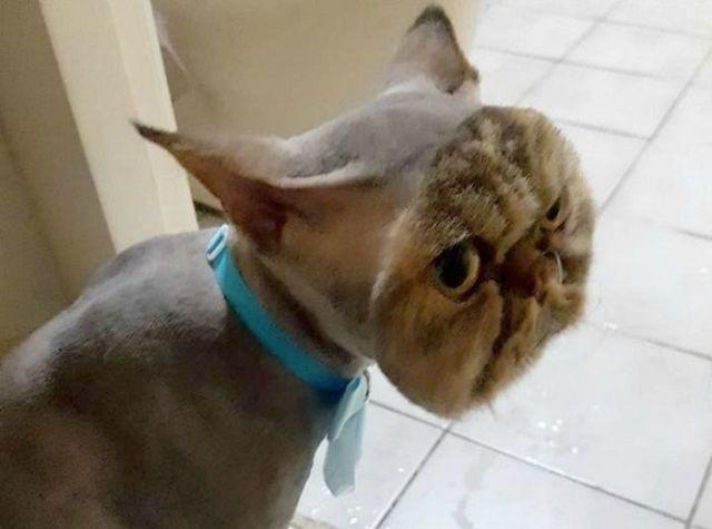 стрижки животных: смешной кот