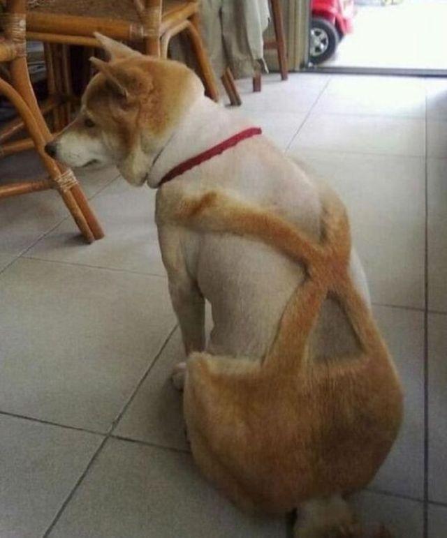 стрижка собаки в стиле карлсона