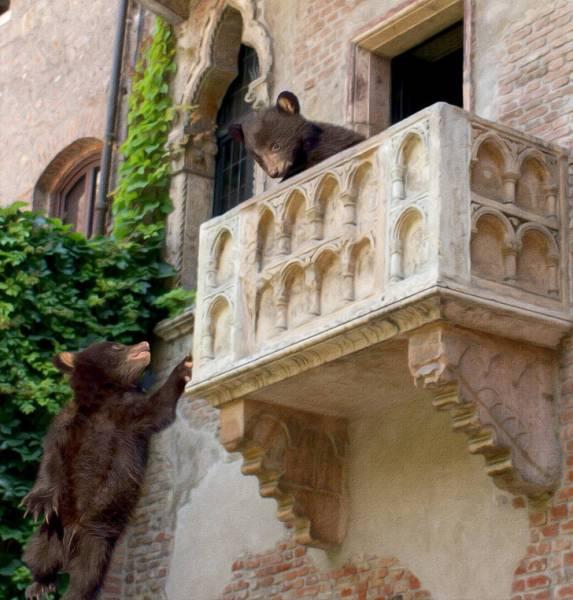 медвежата у балкона