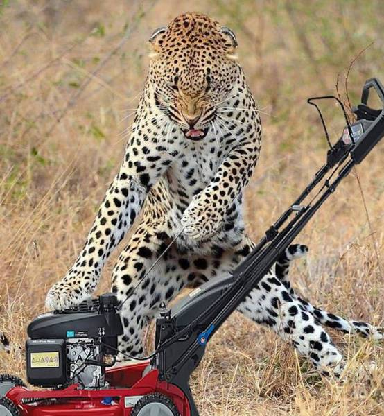 леопард с газонокосилкой