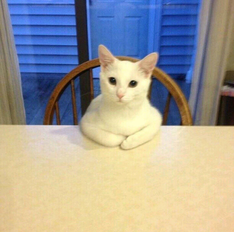 белый кот сидит за столом
