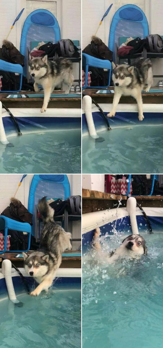 пес и бассейн