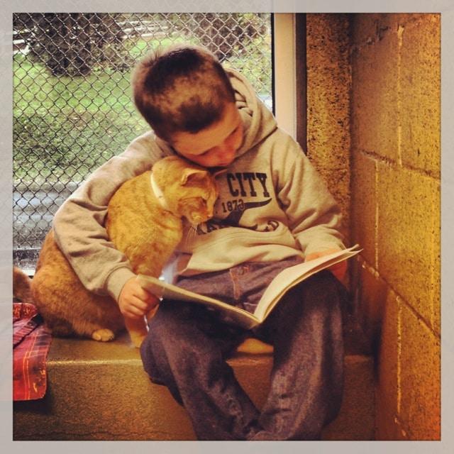 рыжий кот и мальчик