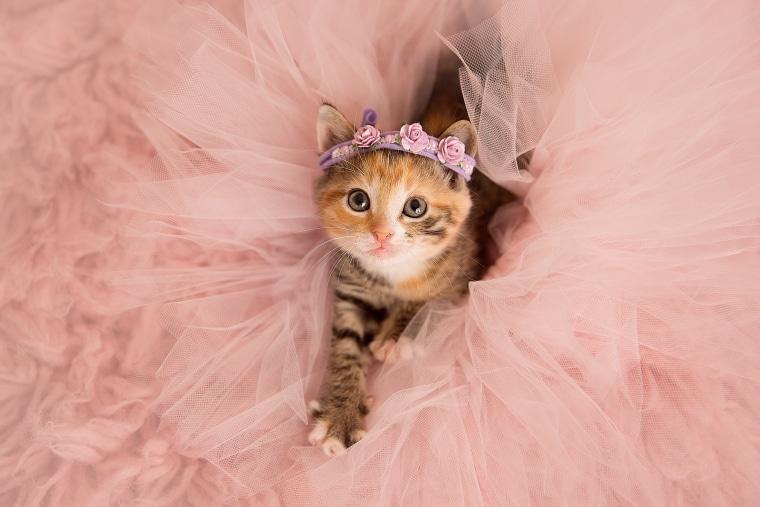 кошка в платье фото