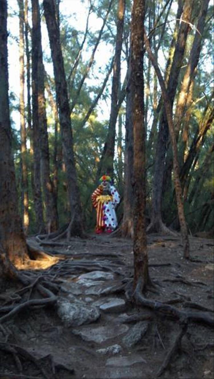 клоун в лесу