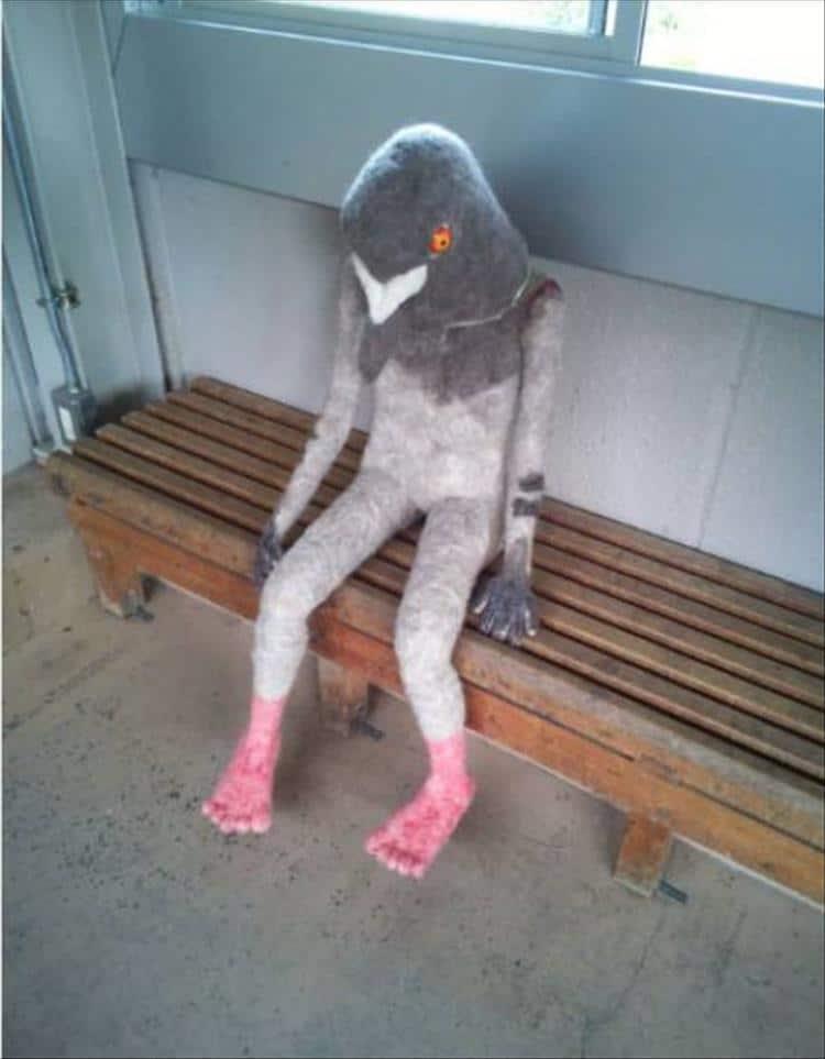 голубь сидит на скамье