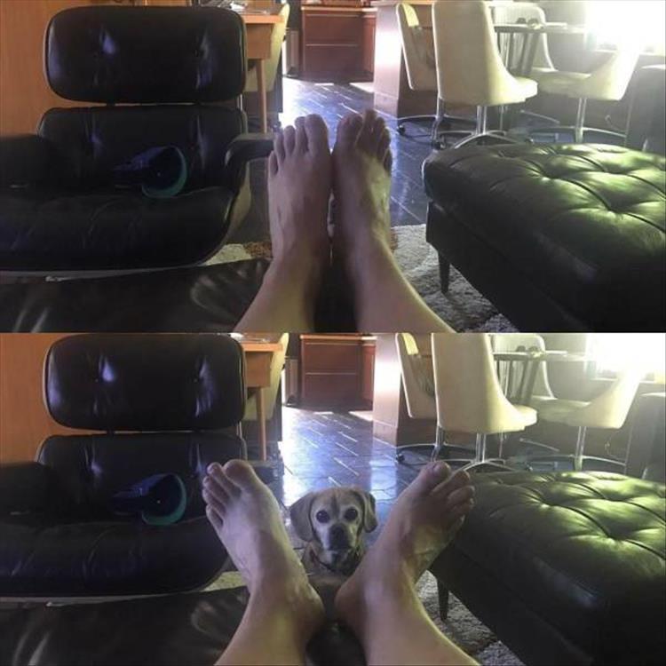пес смотрит на хозяин