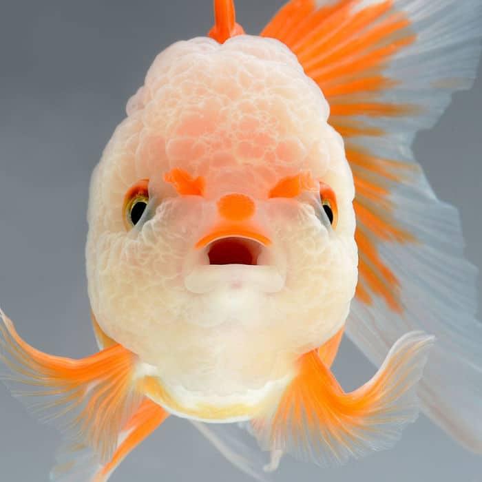 рыбки красивые фото рис 11