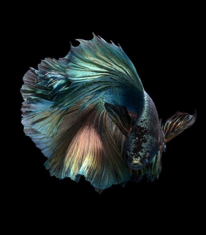 рыбки красивые фото рис 12