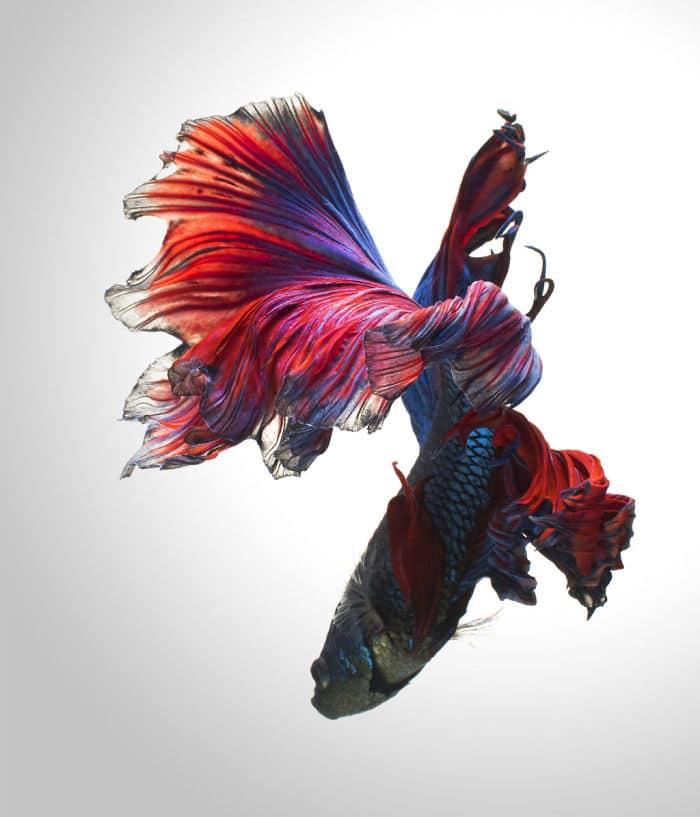 рыбки красивые фото рис 13