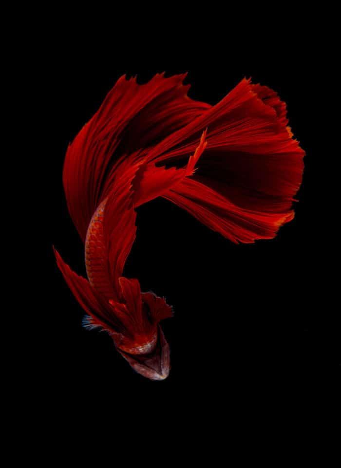 рыбки красивые фото рис 9