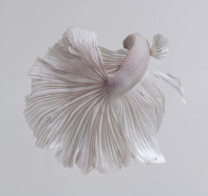 рыбки красивые фото рис 10