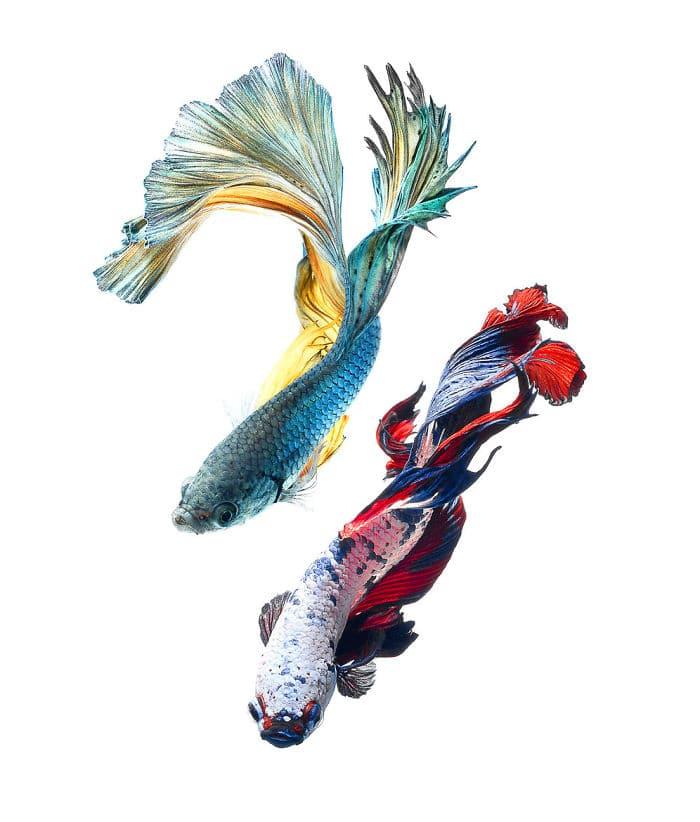 рыбки красивые фото рис 2