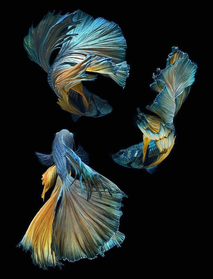 рыбки красивые фото рис 5