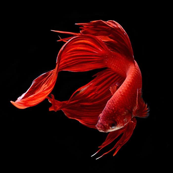 рыбки красивые фото рис 3