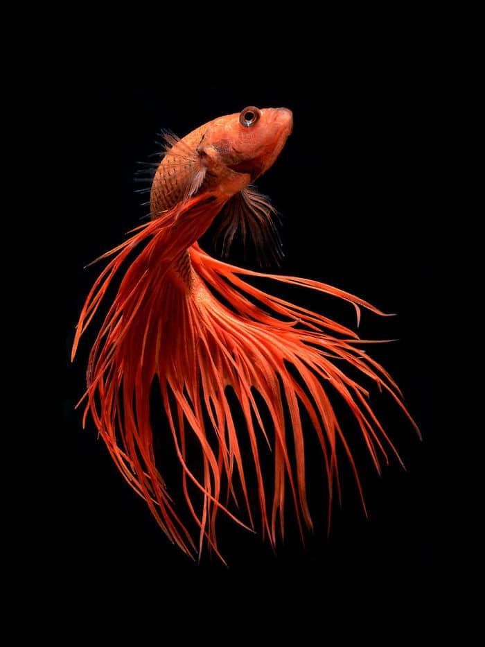 рыбки красивые фото рис 4