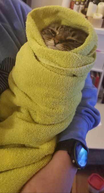 кот, завернутый в полотенце