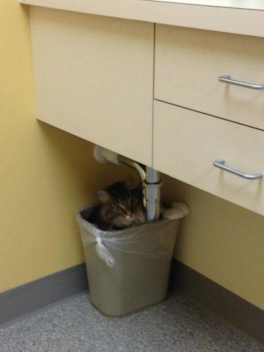 кот в мусорном ведре