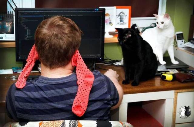 две кошки и парень