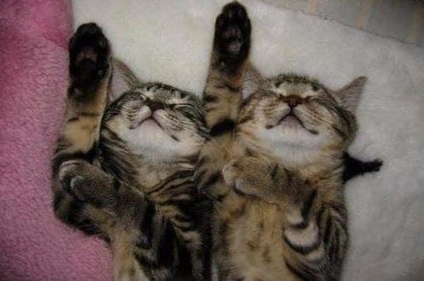 полосатые коты спят