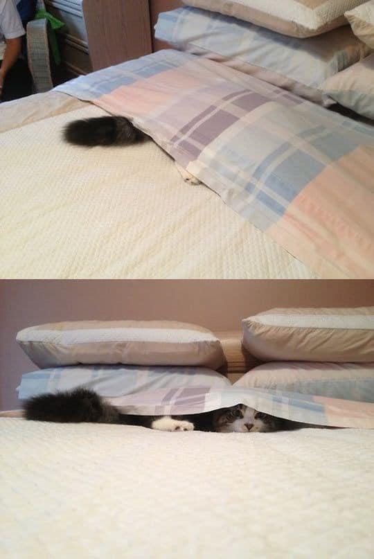 кот под простыней
