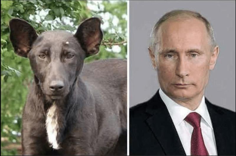 собака и владимир путин