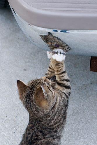 кот рядом с машиной