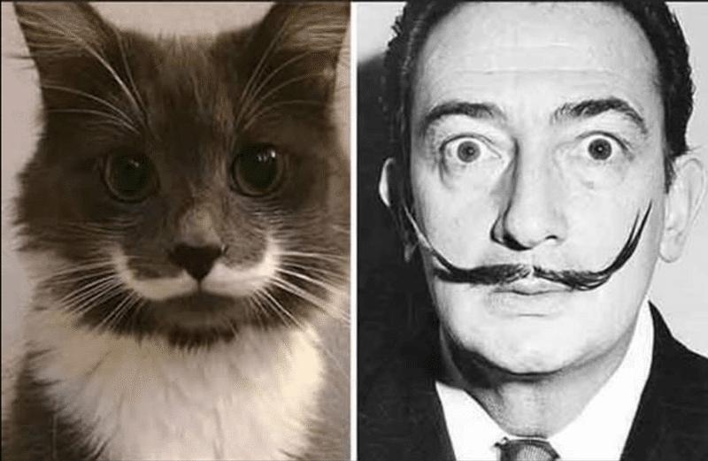кот и сальвадор дали