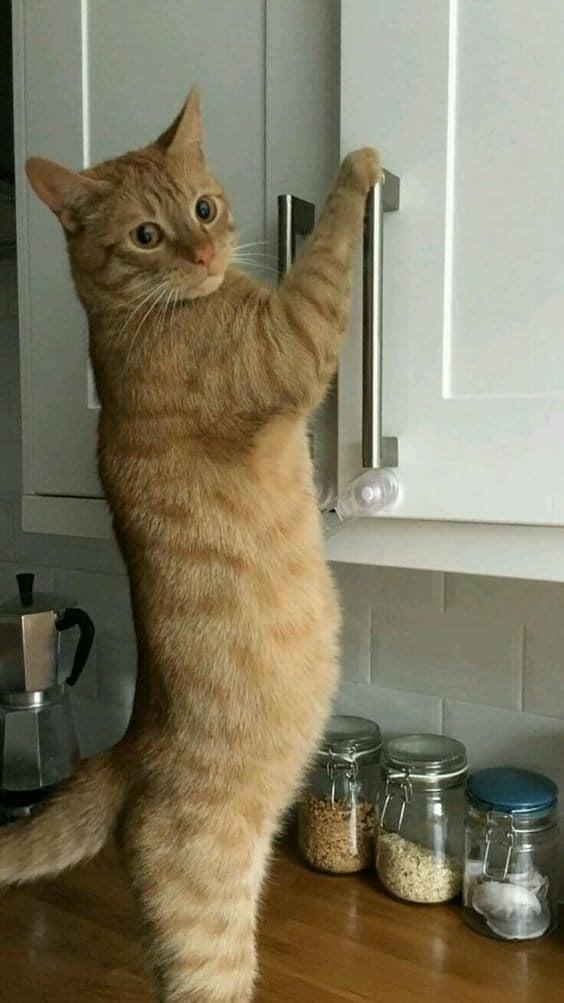 рыжий кот в кухне