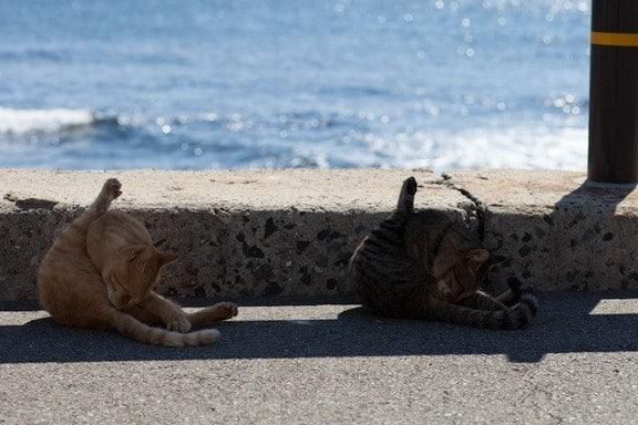 коты вылизываются на набережной