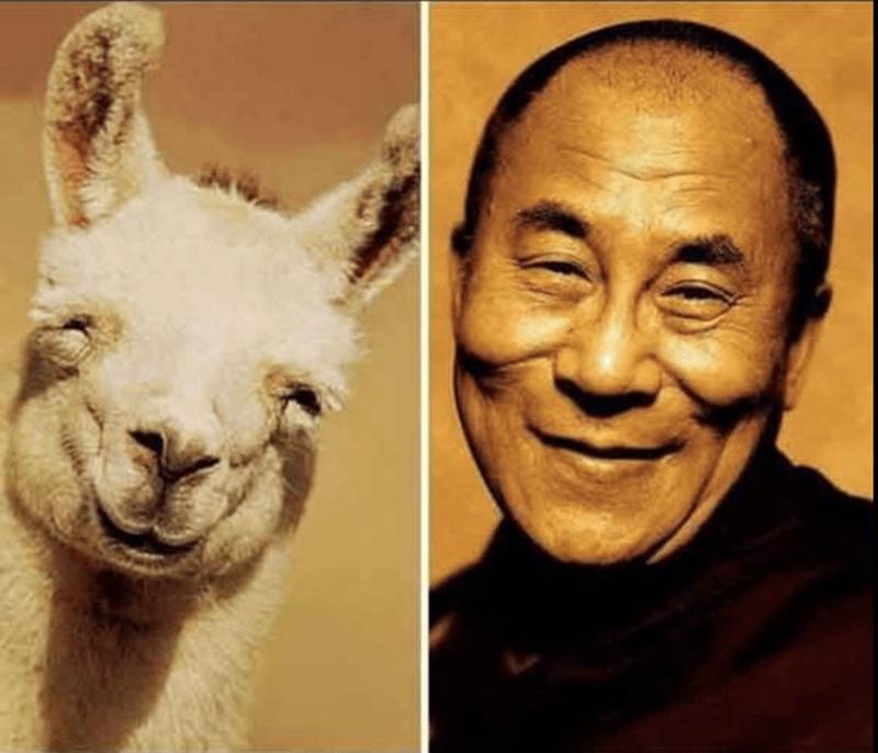лама и Далай Лама