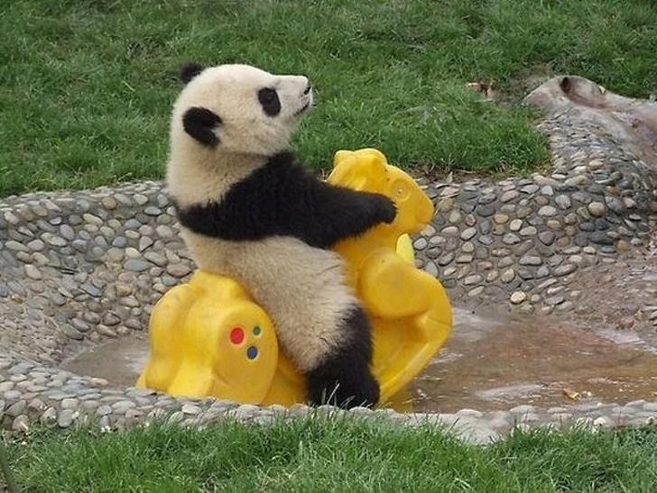 панда на качели