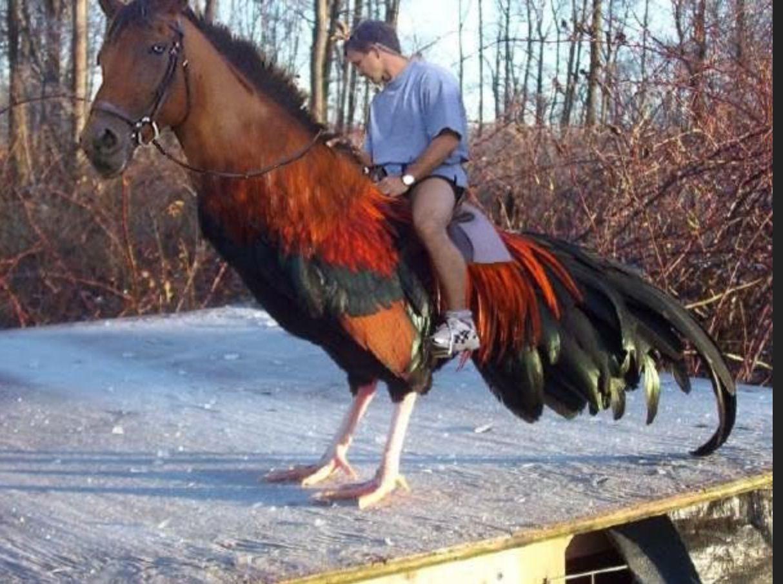 мужчина верхом на коне-петухе