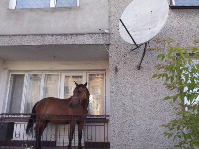 лошадь на балконе