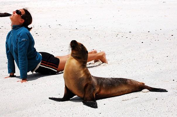 девушка и морской лев